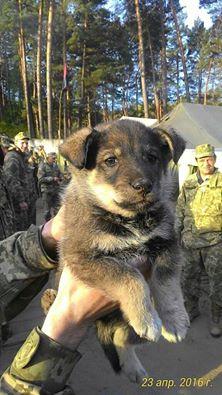 Чим займаються на Донбасі найкращі друзі бійців АТО-3 - фото 11