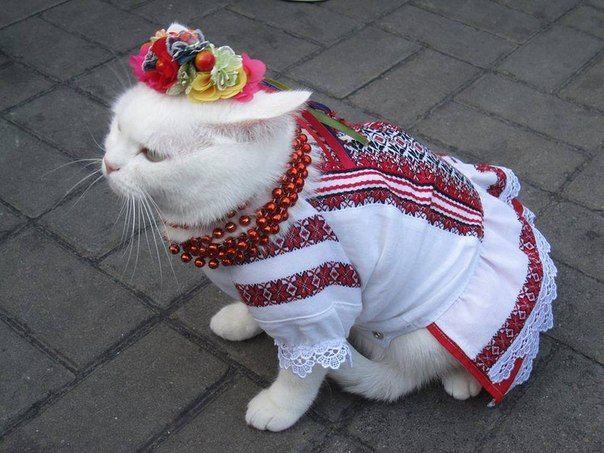 Як проходить День вишиванки у котів - фото 2