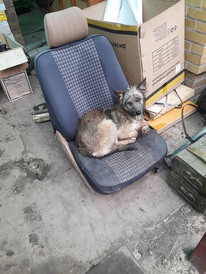 Миколаївські волонтери похизувались фото фронтових котів та собак в зоні АТО - фото 6
