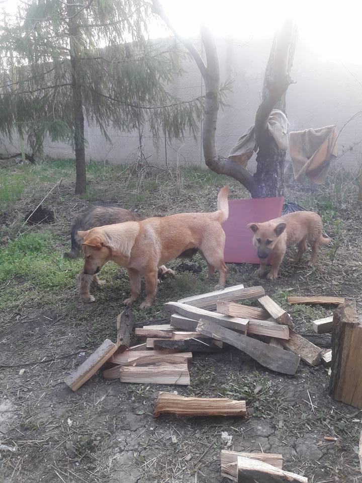 Миколаївські волонтери похизувались фото фронтових котів та собак в зоні АТО - фото 5