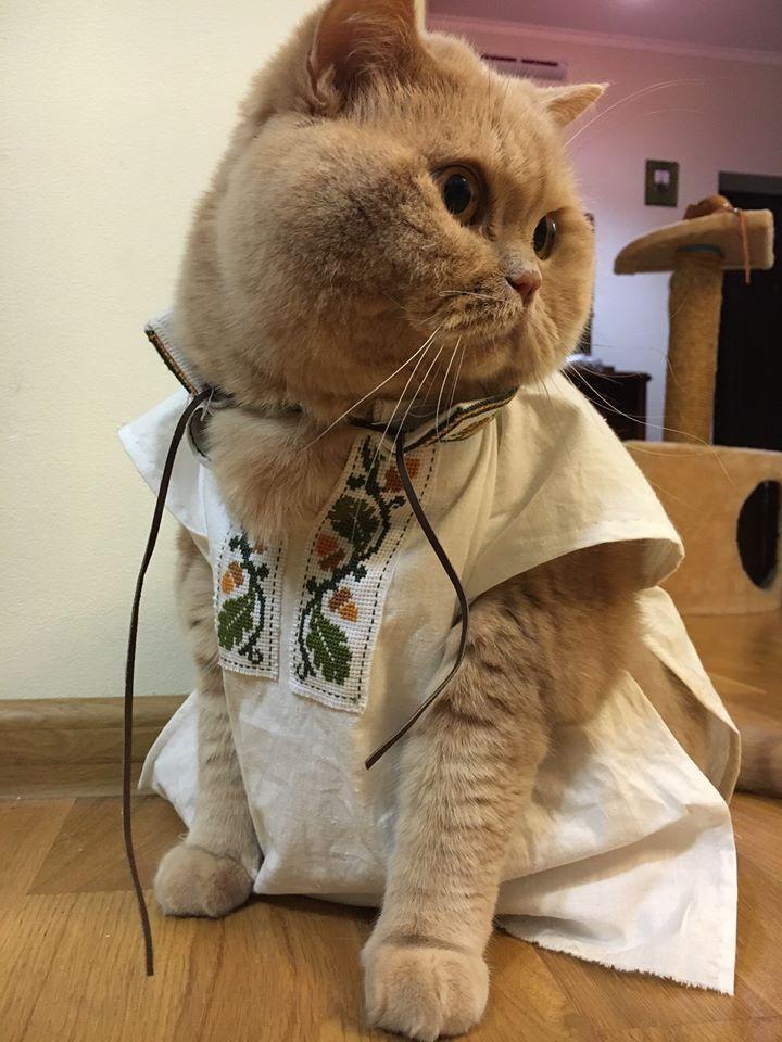 Як проходить День вишиванки у котів - фото 1