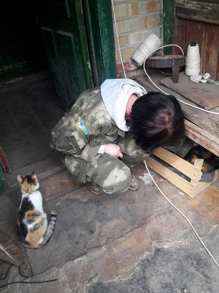 Миколаївські волонтери похизувались фото фронтових котів та собак в зоні АТО - фото 3