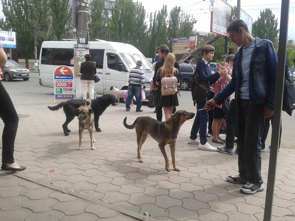 Куди у Миколаєві краще не потикатись, щоб не стати обідом для собак - фото 4