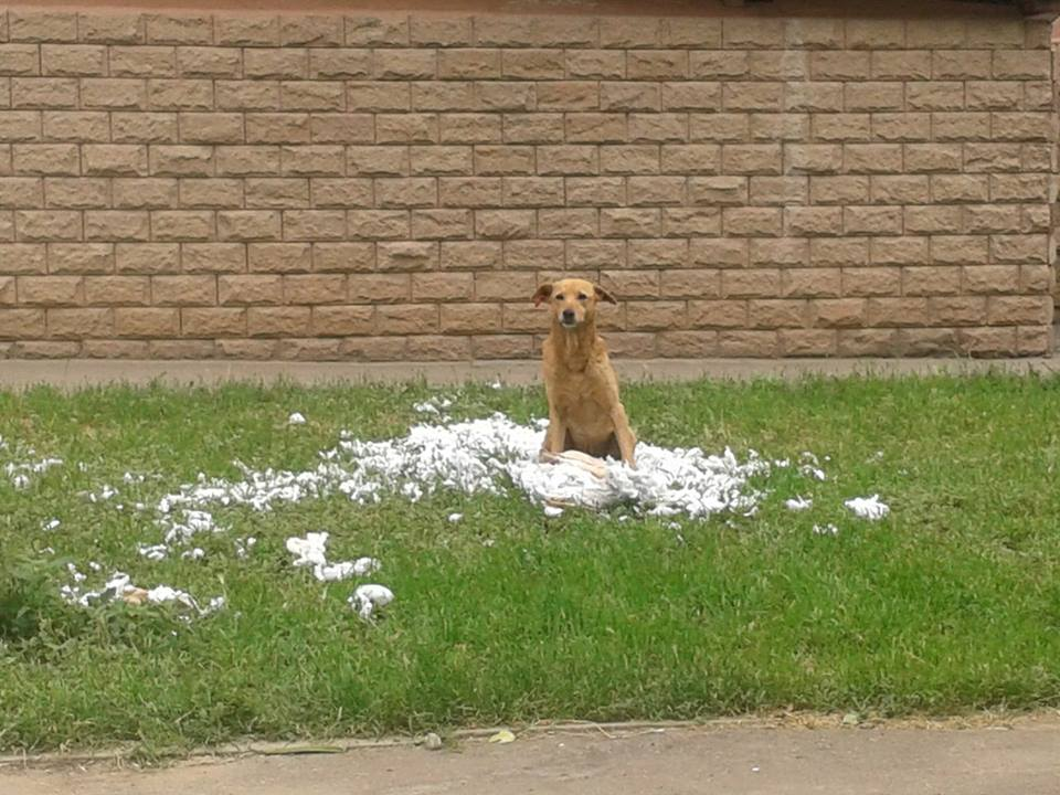 Куди у Миколаєві краще не потикатись, щоб не стати обідом для собак - фото 12