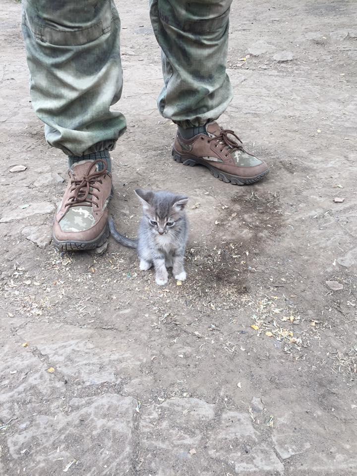 За що котам в АТО треба поставити пам'ятник-6 - фото 8