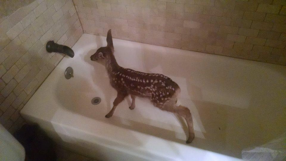 Як оленятко самостійно приймає ванну у квартирі - фото 1