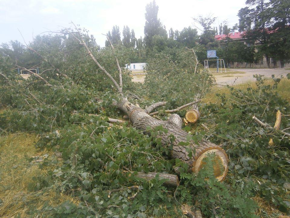 У Миколаєві знову вирубили живі дерева