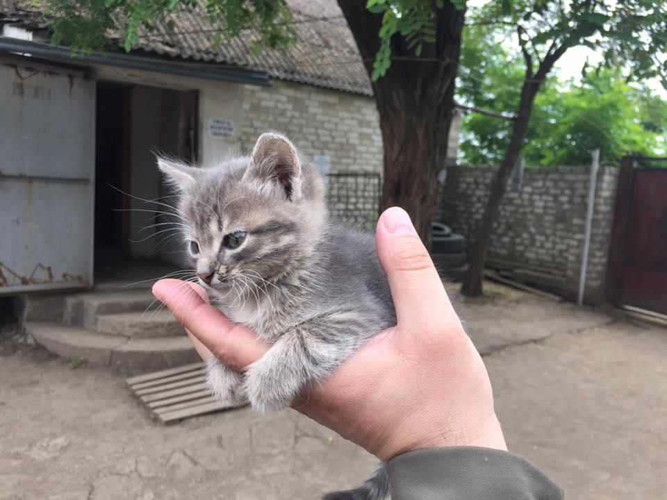 За що котам в АТО треба поставити пам'ятник-6 - фото 6