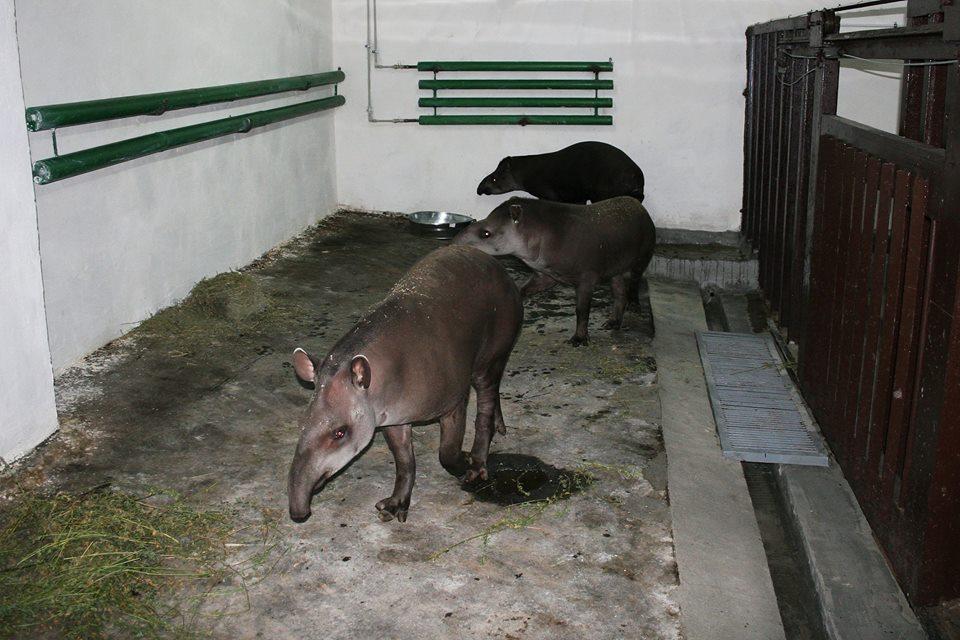 У Миколаївському зоопарку з'явилися тварини, яких не було більше десяти років
