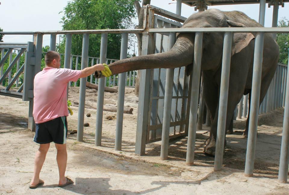 У харківському зоопарку відсвяткували День слонів - фото 2