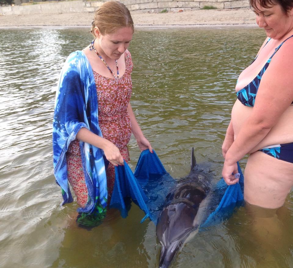 На Миколаївському курорті відпочивальники врятували дельфіна - фото 2
