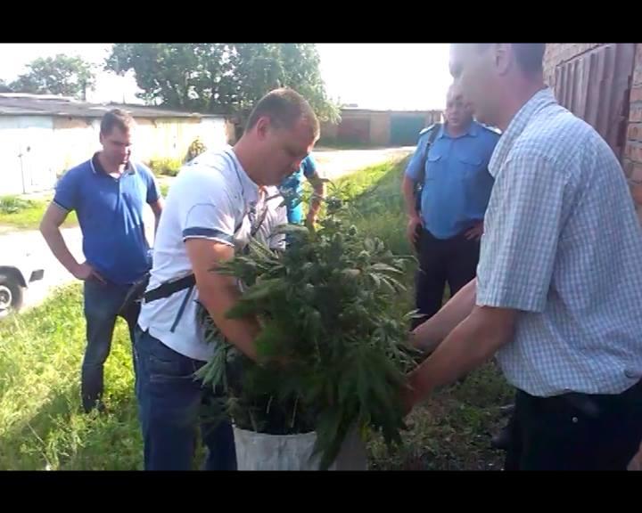 На Харківщині спіймали чоловіка, який вирощував у гаражі коноплю - фото 1