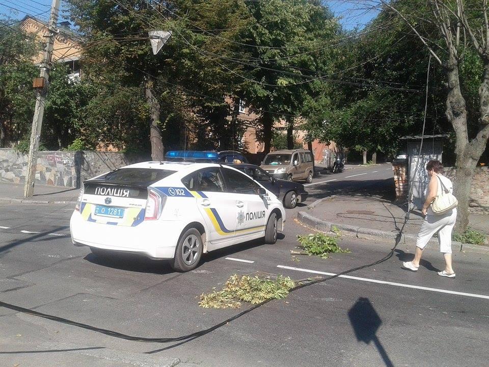 В центрі Вінниці дерево пообривало лінії електропередач - фото 4