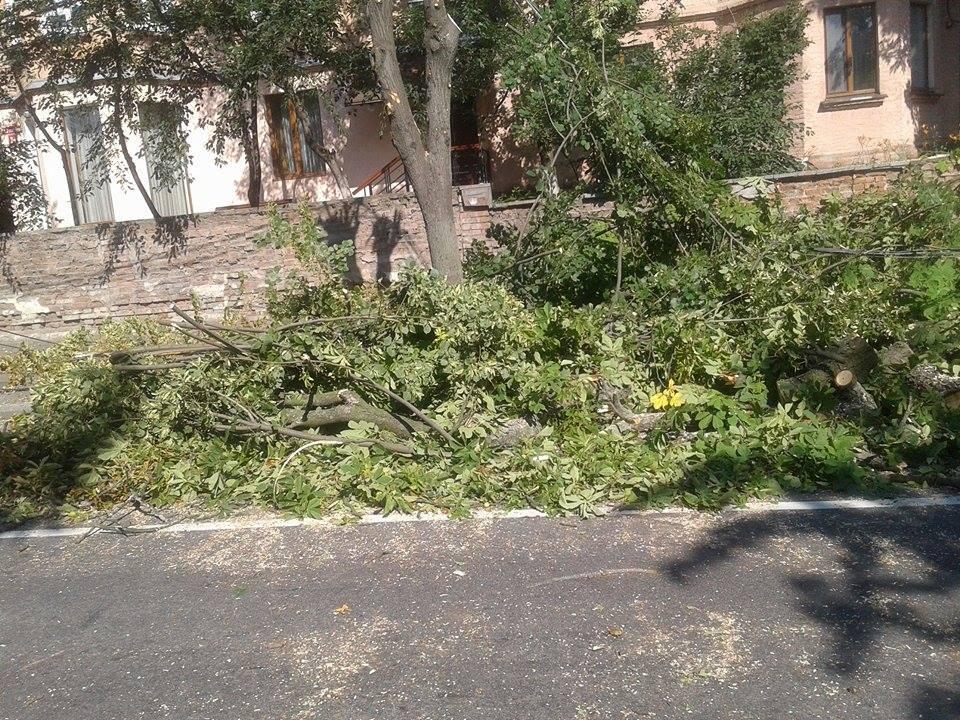 В центрі Вінниці дерево пообривало лінії електропередач - фото 3