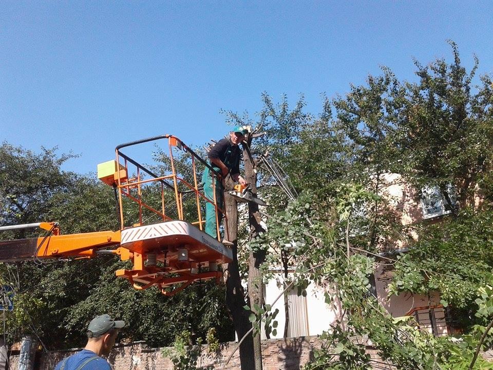 В центрі Вінниці дерево пообривало лінії електропередач - фото 1