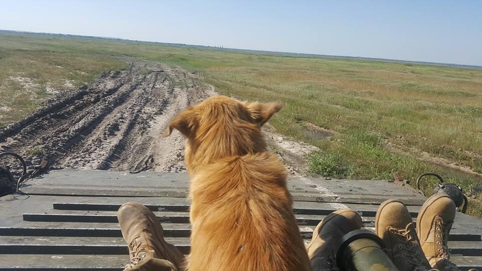 Чим займаються на Донбасі найкращі друзі бійців АТО-5 - фото 2