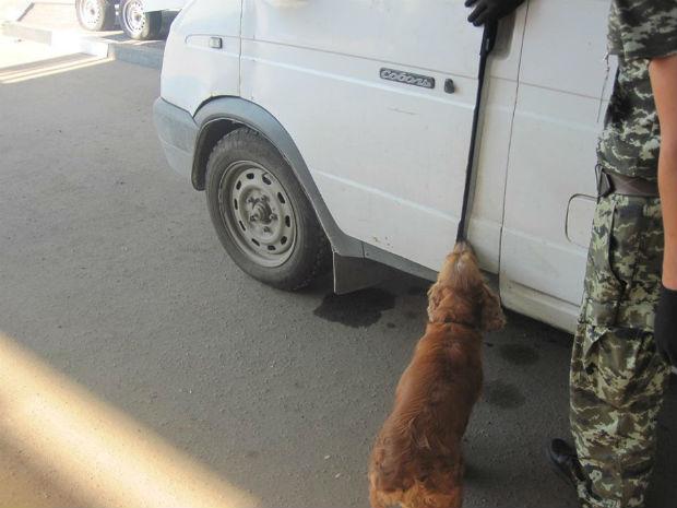 У Вовчанському районі пес-прикордонник виявив набої - фото 1