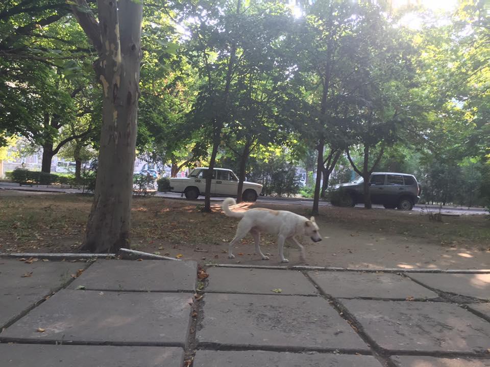 На території Миколаївської обласної лікарні поселилась зграя диких псів - фото 3