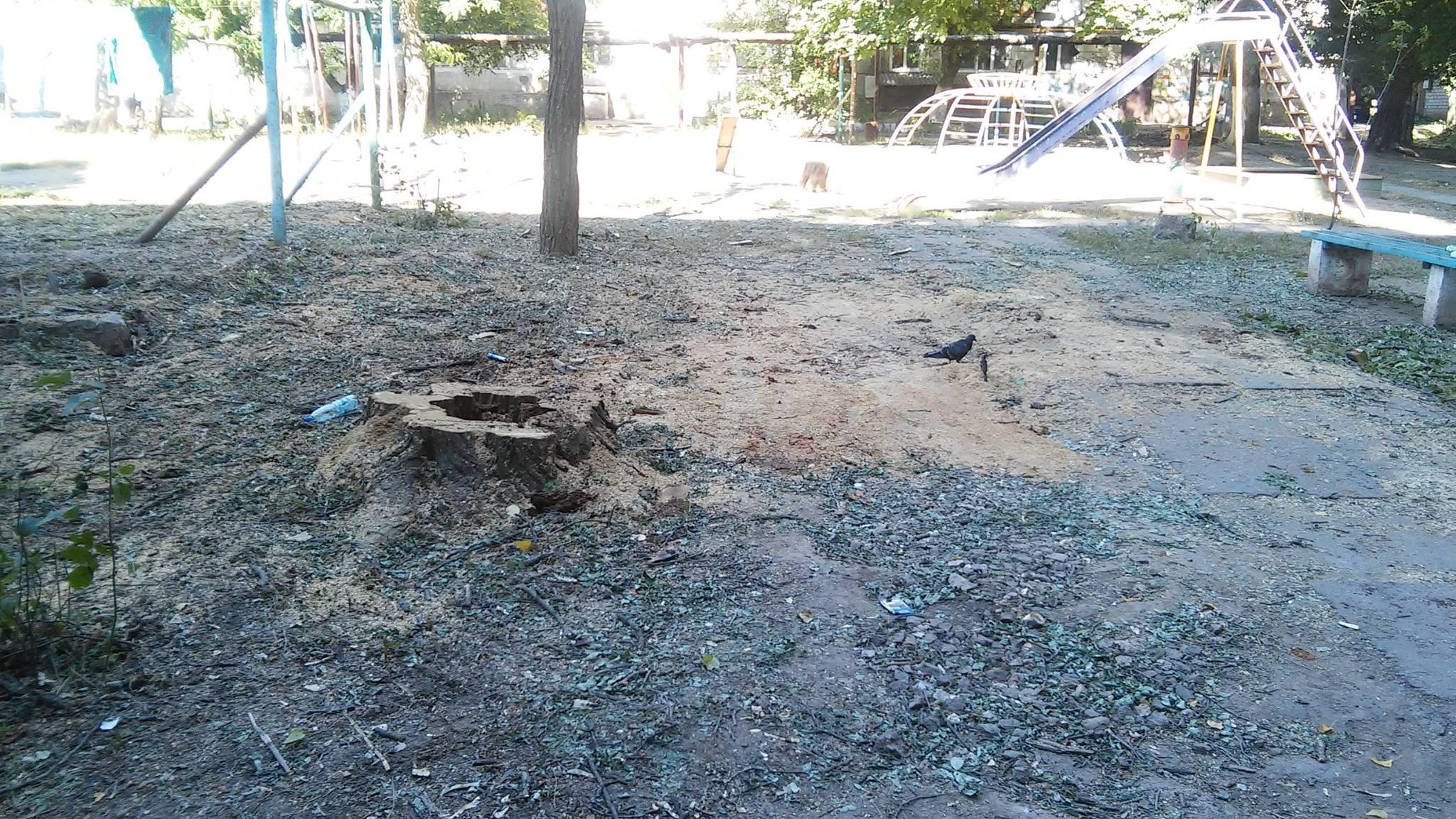 У Миколаєві продовжують пиляти на дрова живі дерева - фото 2