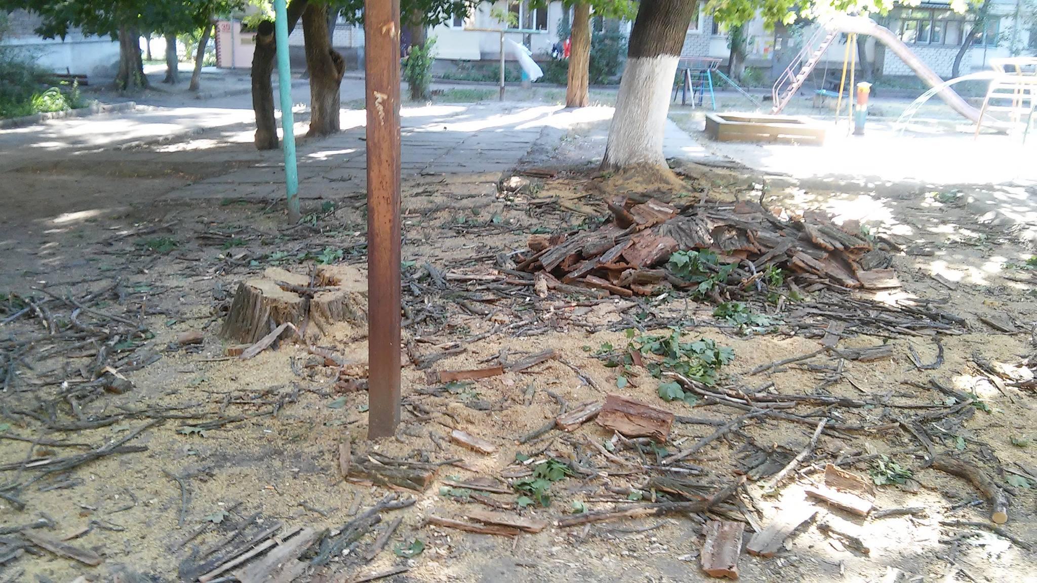 У Миколаєві продовжують пиляти на дрова живі дерева - фото 3