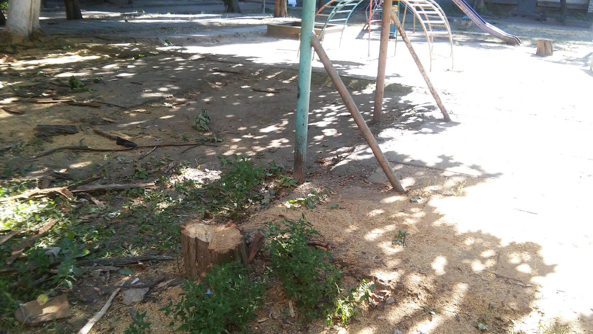 У Миколаєві продовжують пиляти на дрова живі дерева - фото 4