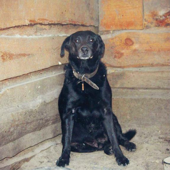 Невигадана історія: Як вірний пес захищав свою померлу господарку  - фото 1