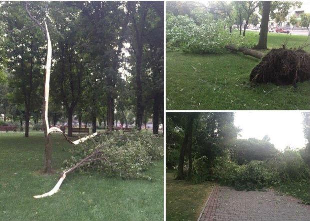 Ураган у Харкові: вирвані з коренем дерева та повалені стовпи - фото 1