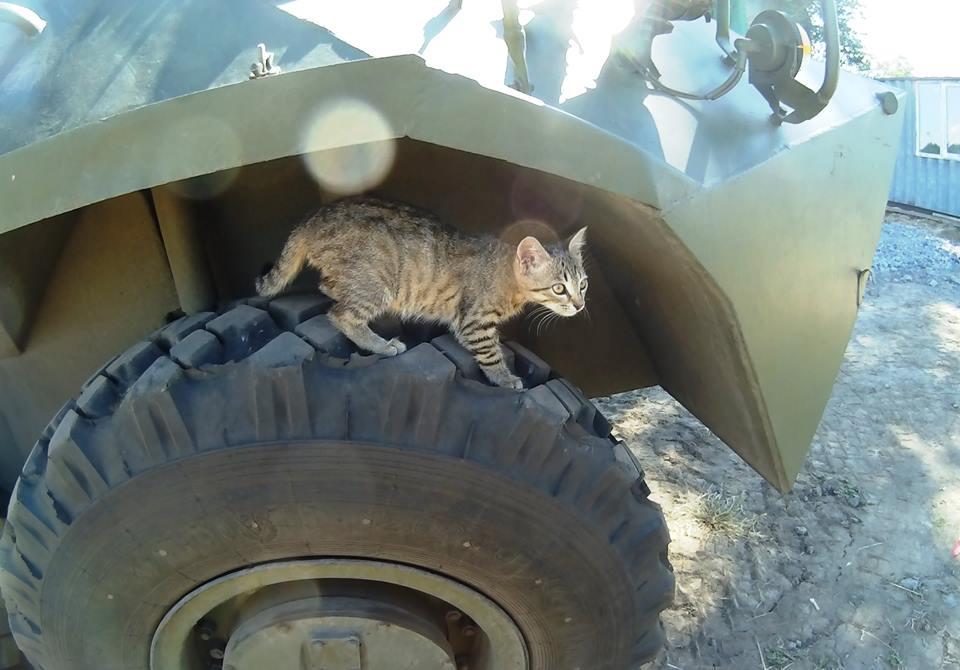 За що котам в АТО треба поставити пам'ятник-7 - фото 5