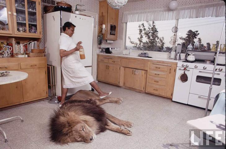 35 домашніх тварин, які вас здивують - фото 32