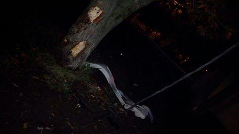 У Харкові троє п'яних поліцейських врізалися у стовп і дерево - фото 1