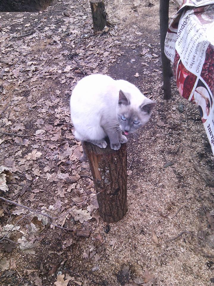 За що котам в АТО треба поставити пам'ятник-7 - фото 11