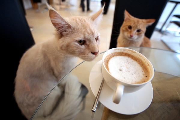 ТОП-5 котячих кафе у світі - фото 4