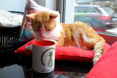 ТОП-5 котячих кафе у світі - фото 7