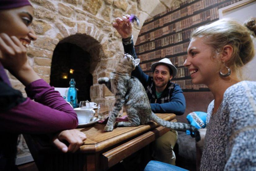 ТОП-5 котячих кафе у світі - фото 5