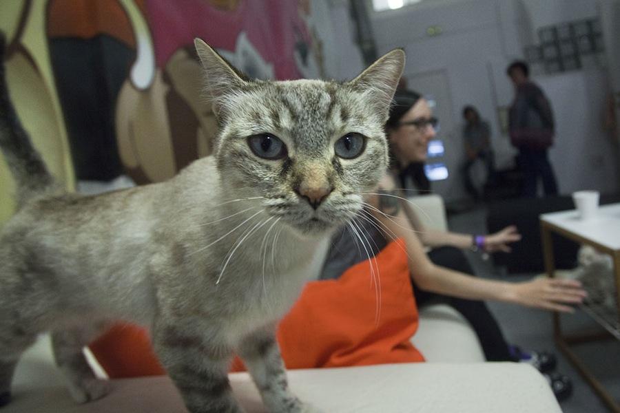 ТОП-5 котячих кафе у світі - фото 3