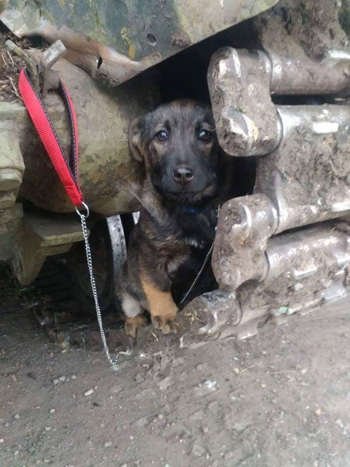 Чим займаються на Донбасі найкращі друзі бійців АТО - 6 - фото 8