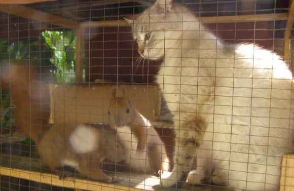 Хмільничанка та кицька виховали 6 білченят - фото 1