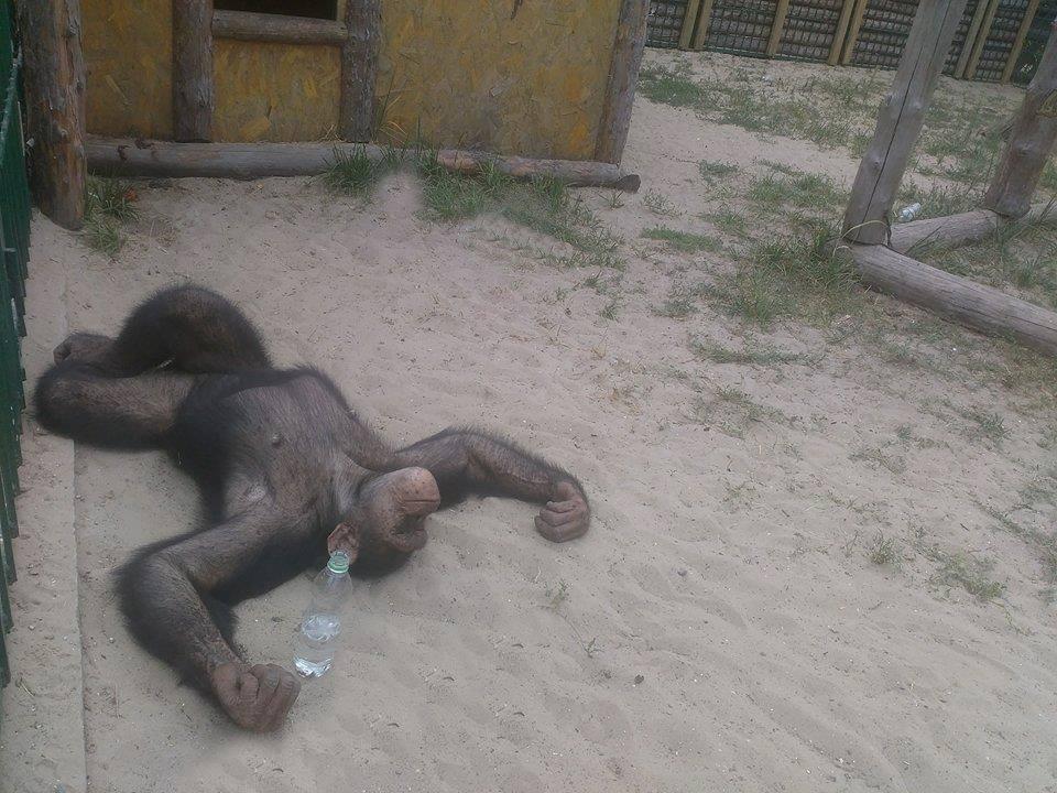 Харківський зоопарк відправив своїх мавп на море  - фото 3