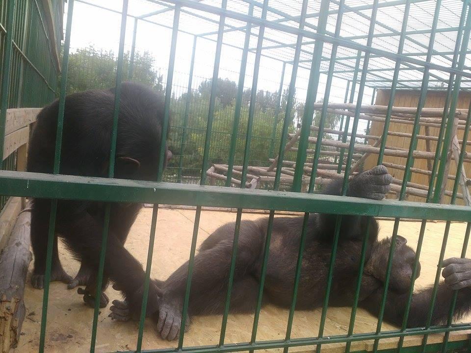 Харківський зоопарк відправив своїх мавп на море  - фото 1