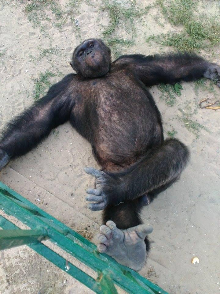 Харківський зоопарк відправив своїх мавп на море  - фото 2