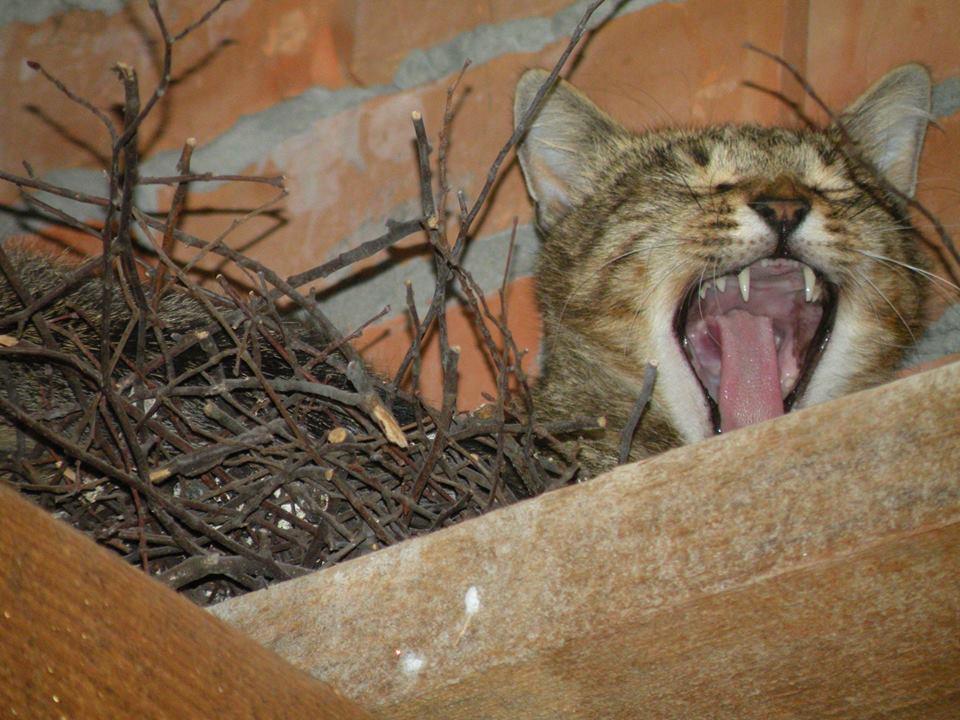 За що котам в АТО треба поставити пам'ятник-8 - фото 10