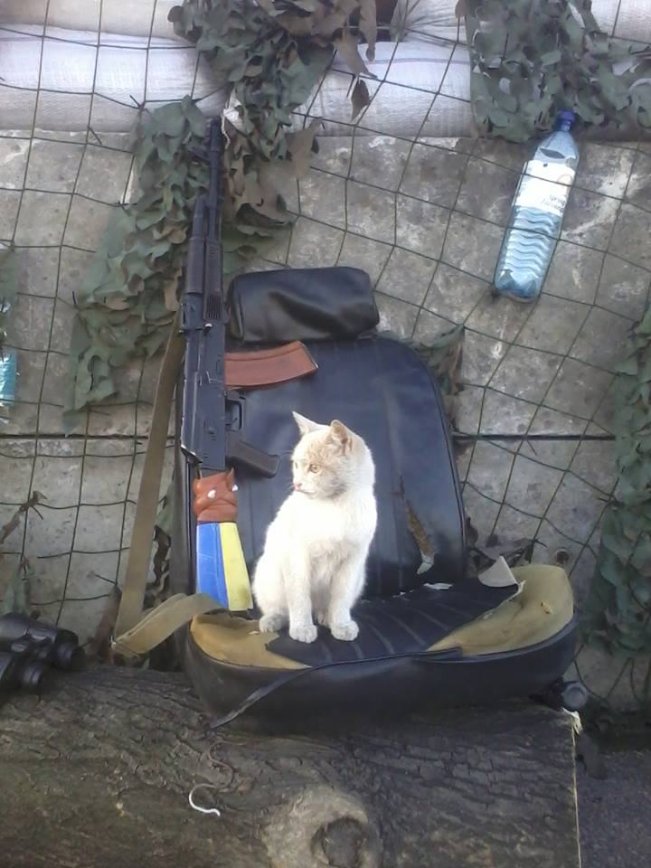 За що котам в АТО треба поставити пам'ятник-8 - фото 2