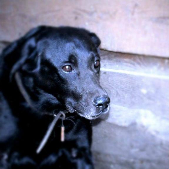 Невигадана історія: Як в Києві вірний пес захищав свою померлу господарку - фото 3