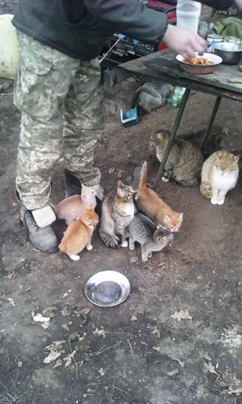 За що котам в АТО треба поставити пам'ятник-8 - фото 3