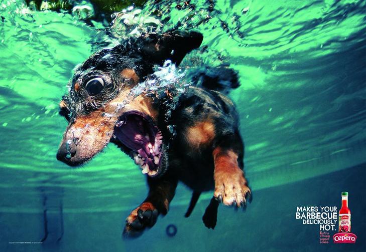 Може, пора переводити собаку на Pedigree Light? - фото 1