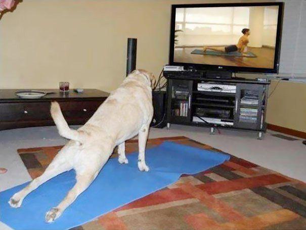 Бути у формі: 15 прикладів того, що тваринам теж потрібна йога - фото 2
