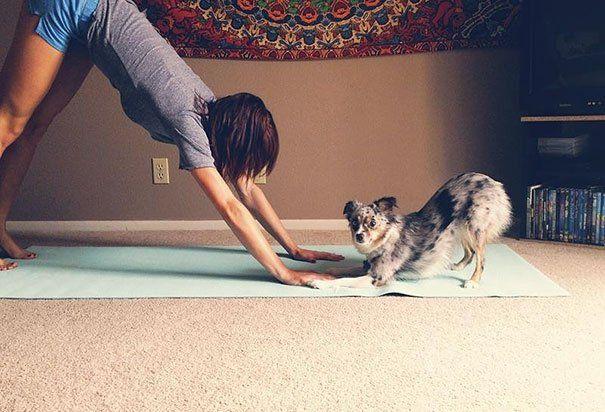 Бути у формі: 15 прикладів того, що тваринам теж потрібна йога - фото 8