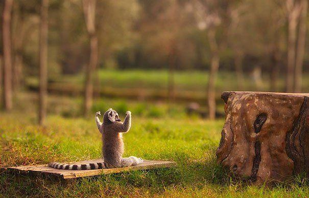 Бути у формі: 15 прикладів того, що тваринам теж потрібна йога - фото 9