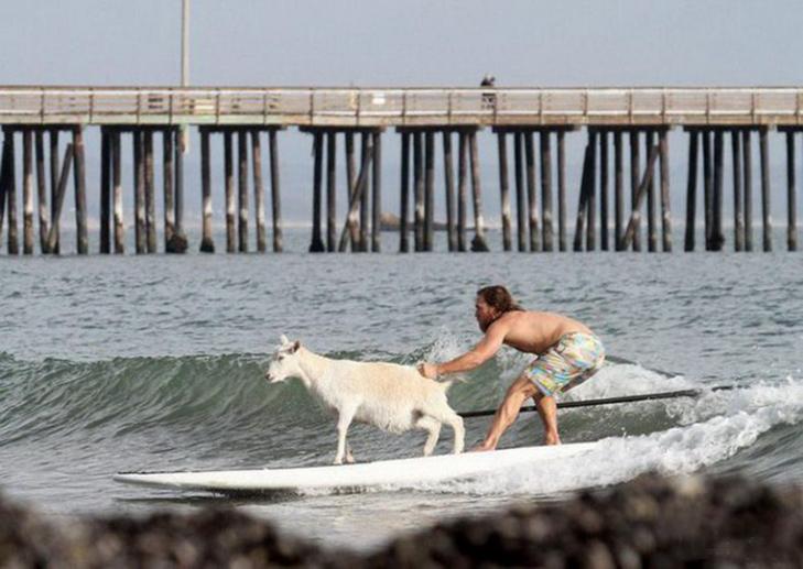 30 дивних і кумедних пляжних фотографій - фото 8