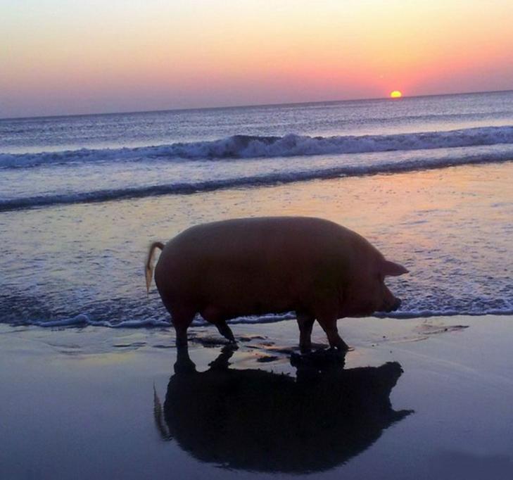 30 дивних і кумедних пляжних фотографій - фото 21